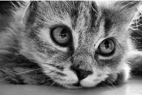 photo d'un chat noir et blanc point de vue