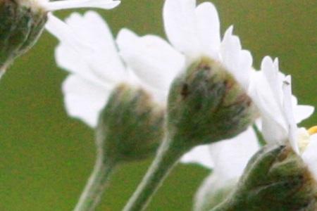 photo fleur sensibilité ISO profondeur de champ ouverture 1600 ISO