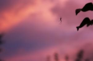 photo Silhouette araignée au coucher de soleil golden hours