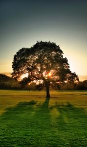 photo Silhouette arbre lumière coucher de soleil