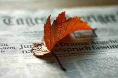Feuille journal automne