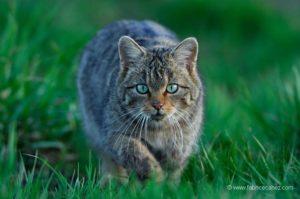 Photo animalière chat