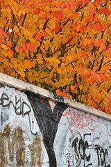 Photo Art naturel urbain feuilles mortes