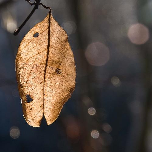 Photo automne feuille morte