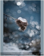 Photo Ice and bokeh feuilles mortes