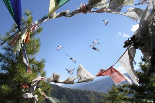 photo liberté oiseaux