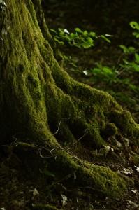 mousse tronc d'arbre melange couleurs photo