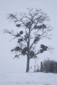photo nature arbre neige hiver