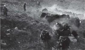 photo esprit du photographe Michael Freeman animal mongolie livre