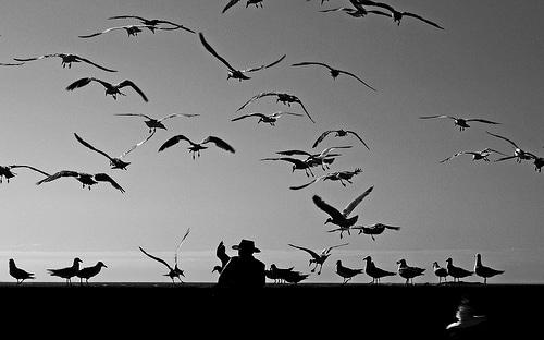 photo oiseaux noir et blanc mer homme