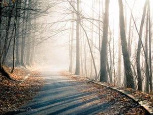 photo route déserte automne feuilles arbre nature