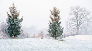 photo arbre neige sapin