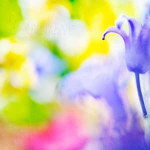 photo fleur couleur bleue Cadavre Exquis