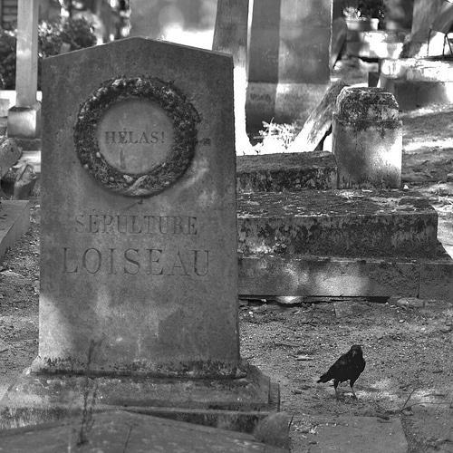 photo noir et blanc sepulture cimetière loiseau