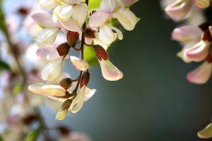 photo fleur blanche arbre