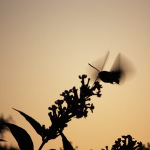 photo oiseau butine fleur stationnaire