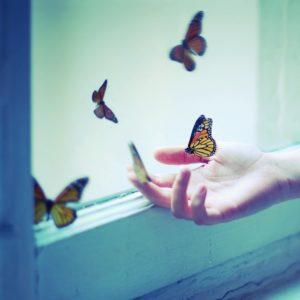 Julie de Waroquier photo papillons liberté