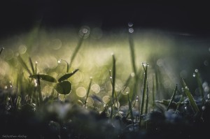 photo herbe bokeh gouttes d'eau