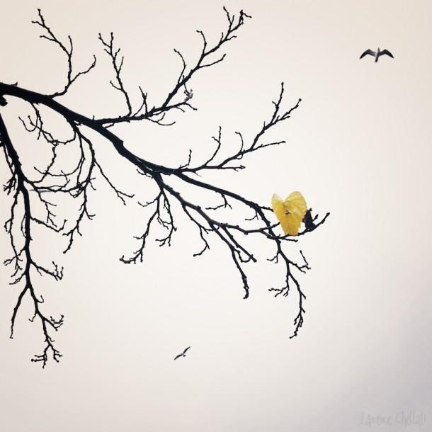 Photo Laurence Chellali arbre ciel feuille oiseau