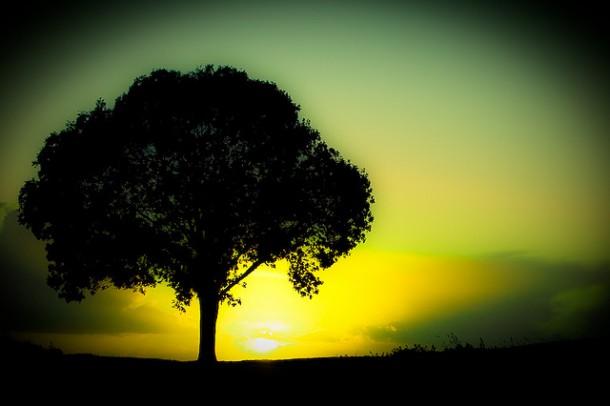 Photo faux Lomo Instagram traitement croisé arbre