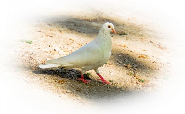Photo vignettage blanc oiseau