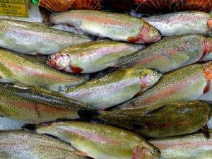photo poissons bruit appareil photo 100 000 ISO