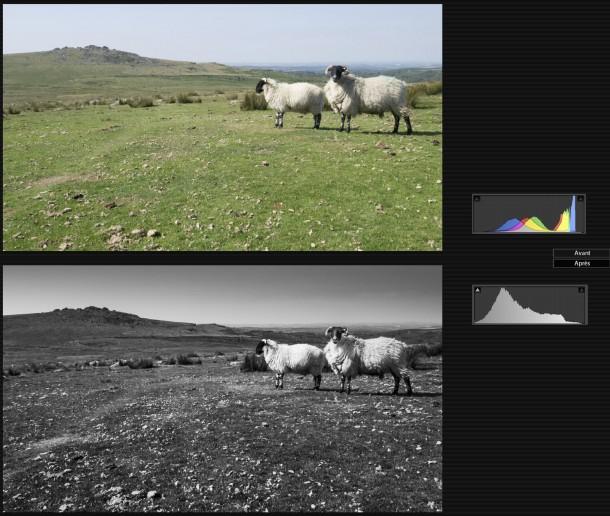 Sur l'image d'origine, l'histogramme est presque calé à droite. On voit qu'au post-traitement, je l'ai redécalé à gauche, notamment en diminuant les hautes lumières du ciel avec un filtre gradué. photo montagne avec et sans exposition à droite différence photo paysage mouton plaine