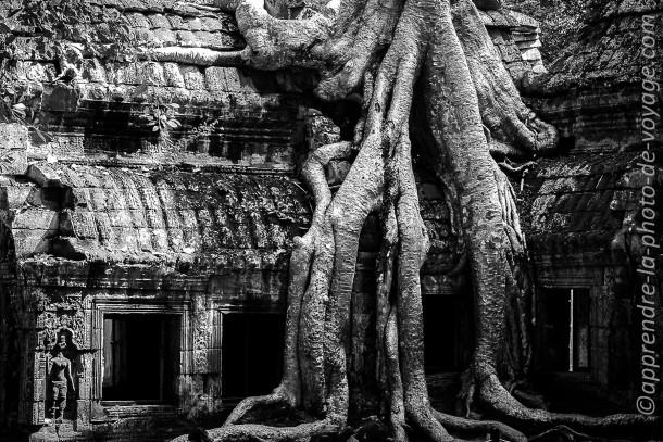 Cambodge photo de voyage noir et blanc arbre racines ruines
