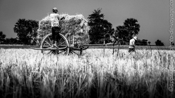 photo agriculture récolte voyage noir et blanc