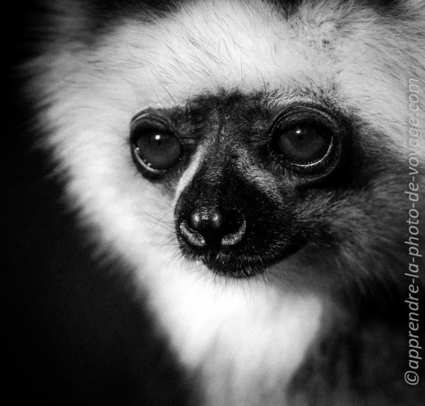 photo noir et blanc animal