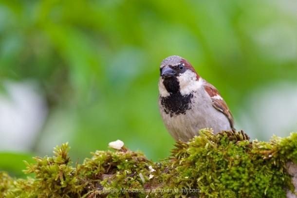 PHOTO animalière oiseau arrière-plan flou uni
