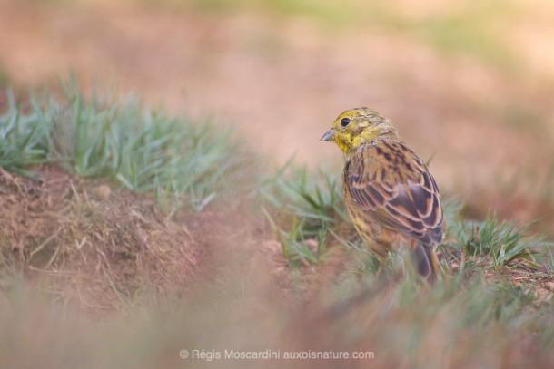 Photo animalière oiseau ras du sol