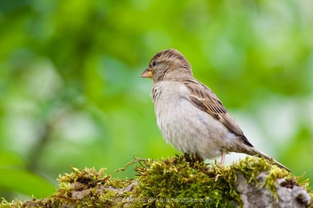 PHOTO animalière oiseau haute vitesse d'obturation 1/1600