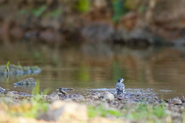 PHOTO animalière oiseau post traitement sous-exposition