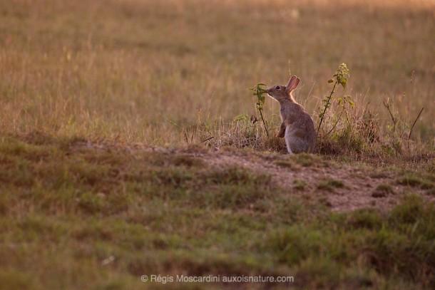 PHOTO animalière lapin lumière