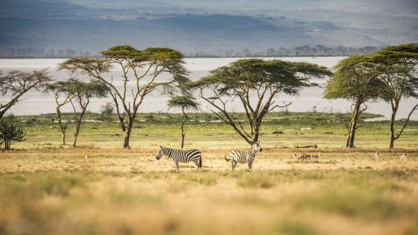 Photo Kenya safari zèbres paysage arbres savane