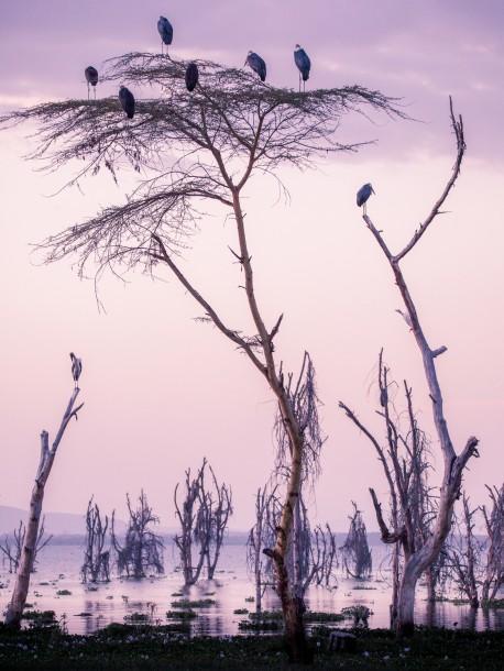marabouts Photo Kenya marais safari coucher de soleil arbre