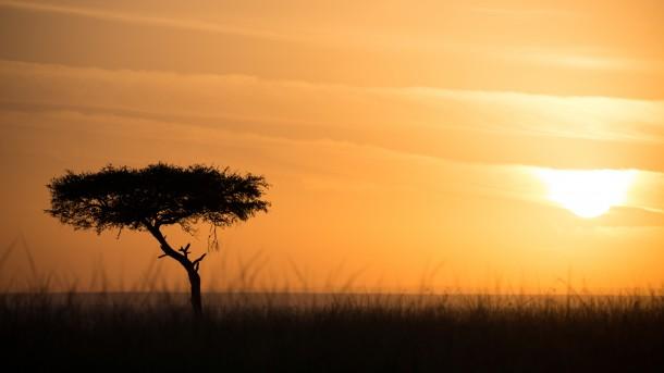 Photo Kenya safari arbre coucher de soleil golden hour savane