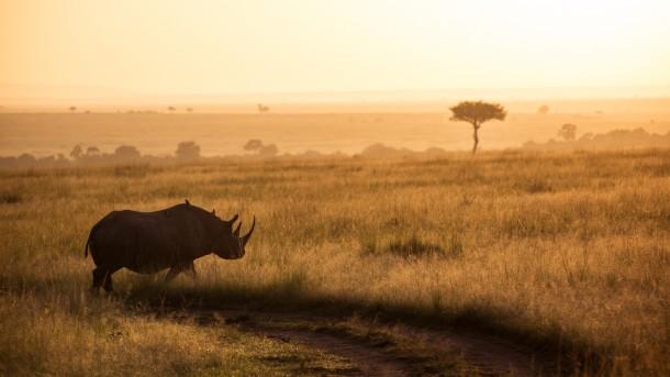 rhinocéros Photo Kenya savane safari coucher de soleil golden hour