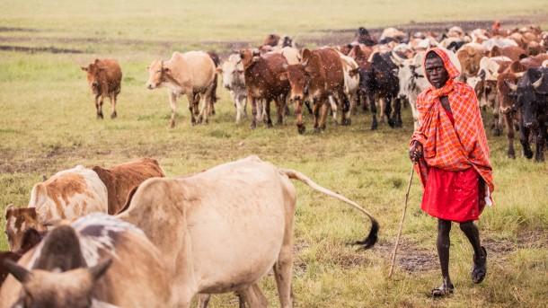 photo kenya safari troupeau berger savane vaches robe Masai