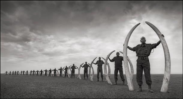 Nick Brandt drame africain défenses braconnage ivoire