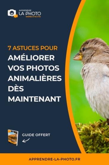 7 astuces pour améliorer vos photos animalières dès maintenant (oiseaux, mammifères, …)