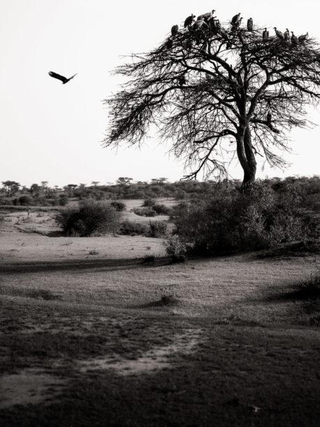 photo paysage noir et blanc laurent breillat