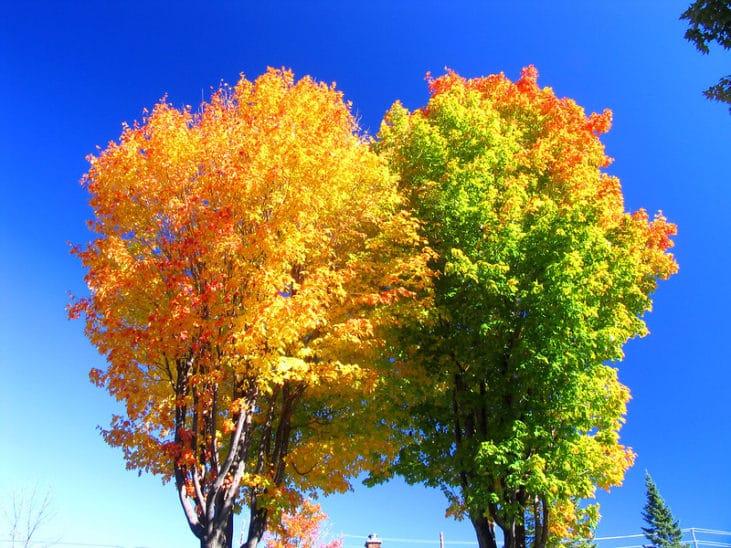 Exemple d'image aux couleurs saturées par un filtre polarisant